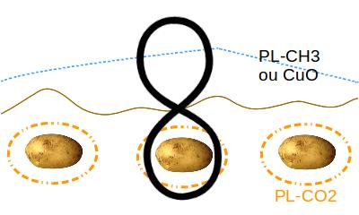 patate-et-bouclier